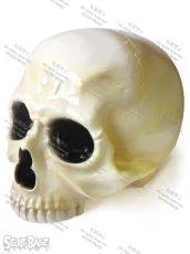画像1: 骸骨頭 1/1 SKULL HEAD (1)