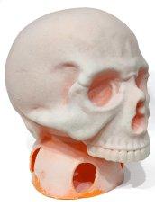 画像2: ペイント用 1/1 SKULL HEAD (2)